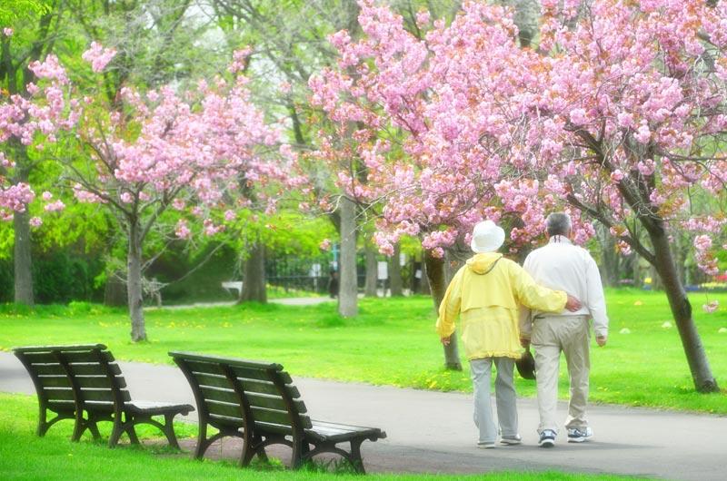 現代の悩みを解決する樹木葬という考え方