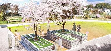 大きな桜の木が印象的な樹木葬霊園のイメージ